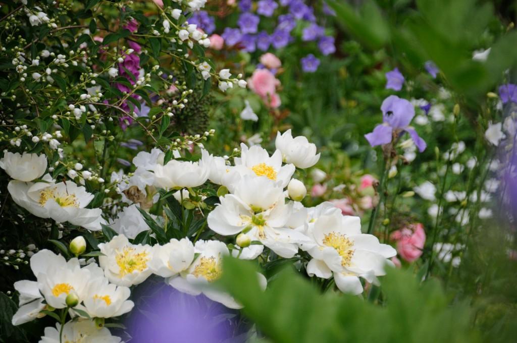Schnittblumen aus dem eigenen Garten