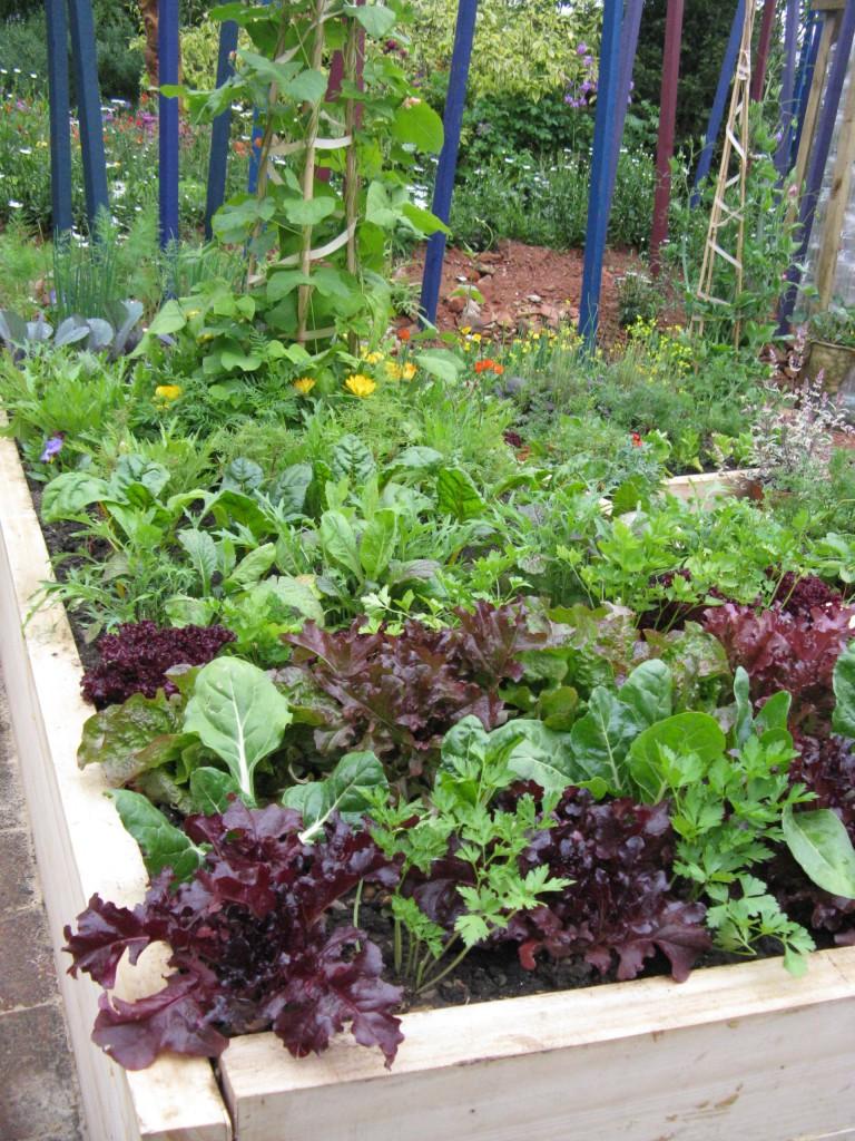 Ein Garten in der Stadt