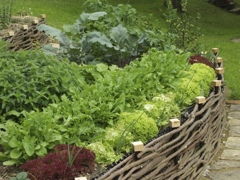 Der kleine Gemüsegarten